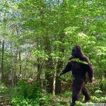 normal_big_foot2