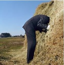 Man Head in Haystack